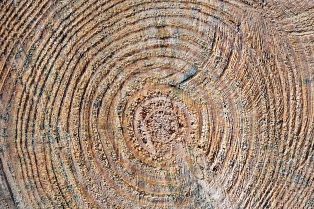 Vista frontale del tronco di legno con gli anelli del fondo di crescita