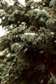 Vista frontale dell'arbusto verde con neve
