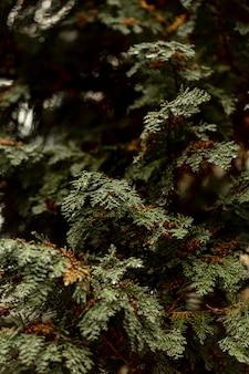 Vista frontale dell'arbusto verde