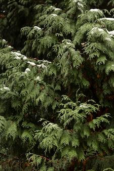 Vista frontale della pianta verde con neve