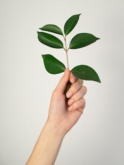 Vista frontale delle foglie della tenuta della mano