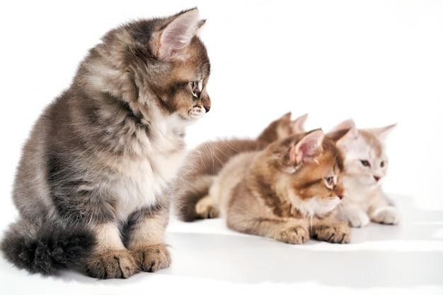 Vista frontale di quattro gatti di bambino.