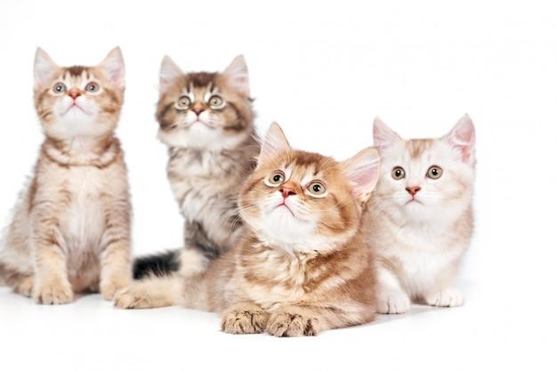 Vista frontale di quattro gattini.