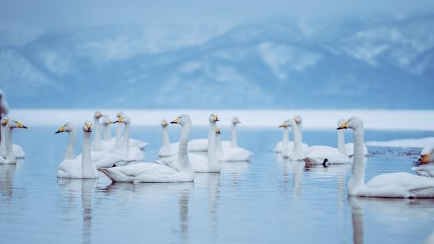 Vista lago d'oca in inverno