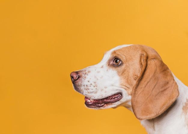 Vista laterale cane con bellissimi occhi