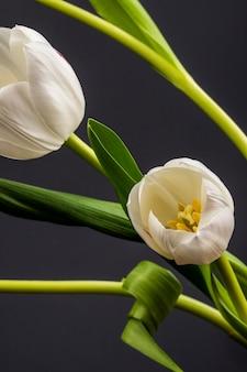 Vista laterale dei tulipani bianchi di colore isolati sulla tavola nera