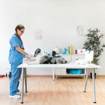 Vista laterale del veterinario femminile sorridente con il cane sulla tavola nella clinica