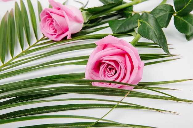 Vista laterale delle rose rosa di colore su una foglia di palma su fondo bianco
