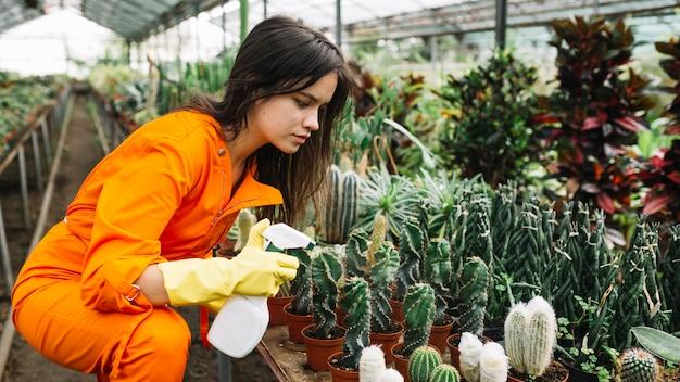 Vista laterale di un giardiniere femminile che spruzza acqua sulle piante succulente