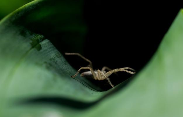 Vista laterale di un ragno sulla caccia.