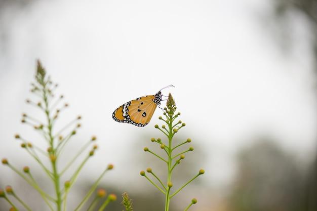 Vista laterale farfalla seduta sulla pianta del fiore