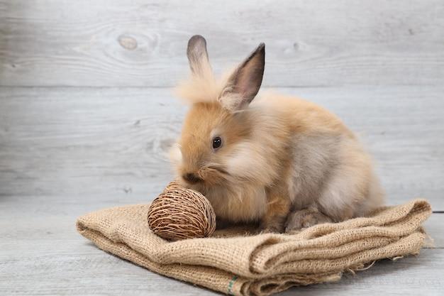 Vista laterale un coniglio rosso o marrone del bambino su tela di sacco