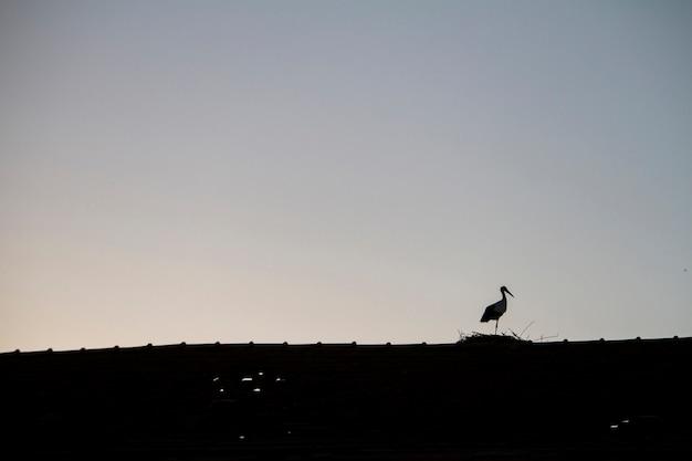 Vista minima della sagoma di una cicogna bianca su un tetto.