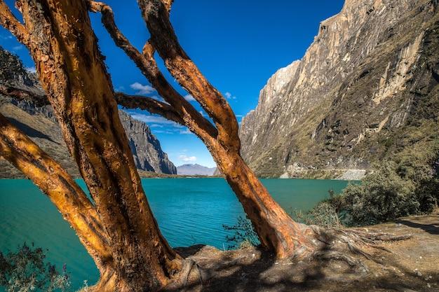 Vista mozzafiato degli alberi in riva al lago nel parco nazionale huascaran catturato a huallin, perù