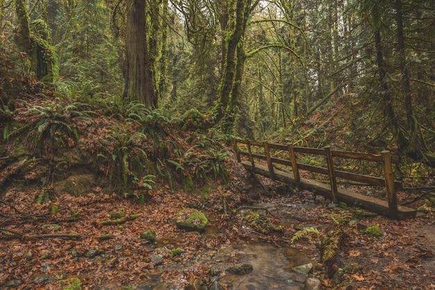 Vista mozzafiato di un ponte di legno in una foresta tropicale coperta di muschio