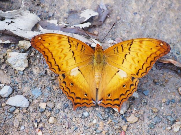 Vista op della farfalla arancio con le ali di volo isolate su bianco
