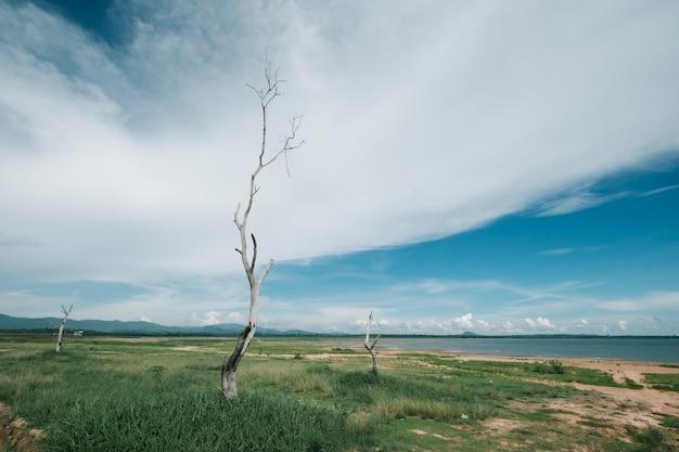 Vista paesaggio albero morto