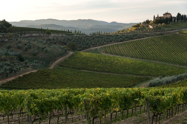 Vista panoramica dei vigneti, gaiole in chianti, toscana, italia