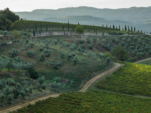 Vista panoramica dei vigneti, toscana, italia