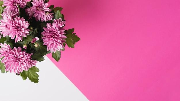 Vista panoramica del bouquet di fiori di crisantemo su sfondo bianco e rosa
