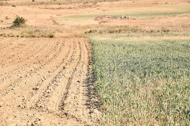Vista panoramica del campo di grano