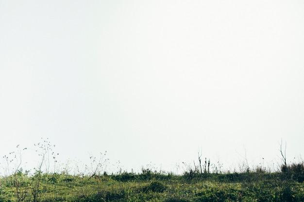Vista panoramica del paesaggio verde