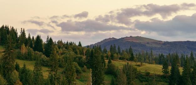 Vista panoramica dell'abetaia delle montagne carpatiche dopo il tramonto con il cielo nuvoloso