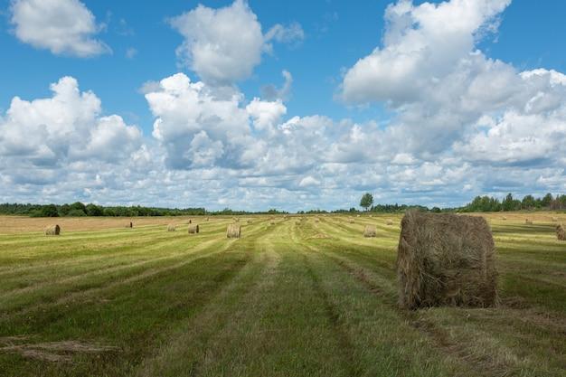 Vista panoramica sul campo con mucchi di fieno. immagine orizzontale.