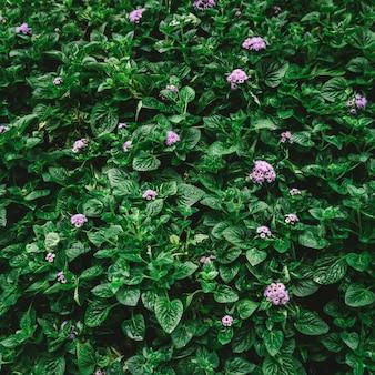 Vista piana di disposizione del fondo verde della foglia con il filtro d'annata