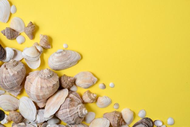 Vista piana laici e superiore di vari tipi di conchiglie su sfondo giallo.