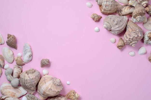 Vista piana laici e superiore di vari tipi di conchiglie su sfondo rosa.