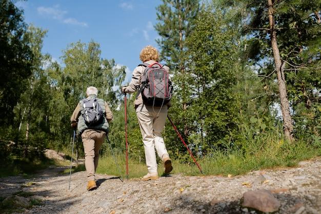 Vista posteriore di due senior backpackers con bastoni da trekking in movimento lungo la strada forestale tra alberi verdi