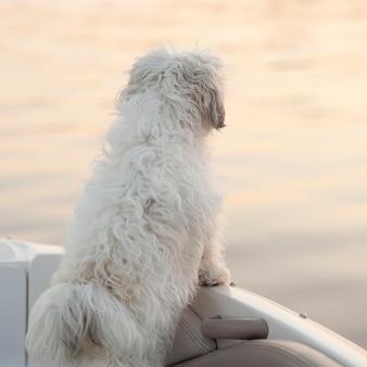 Vista posteriore di un cane sul bordo di una barca in lake of the woods, ontario