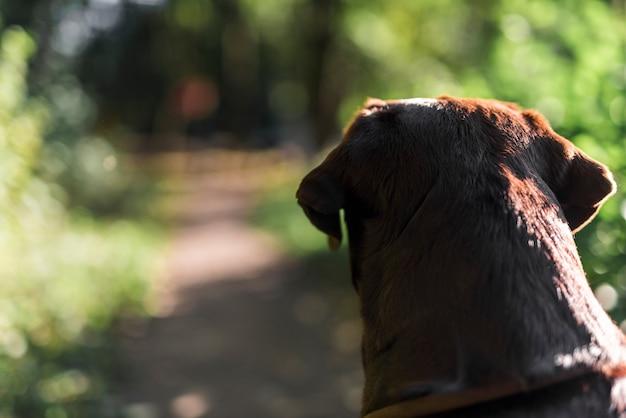 Vista posteriore di un labrador nero