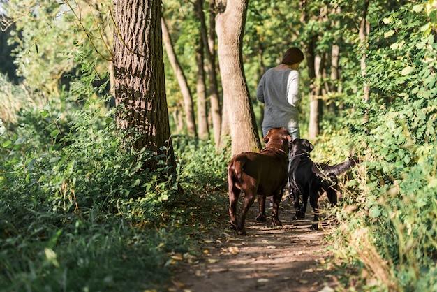 Vista posteriore di una donna che cammina con i suoi due labrador in pista alla foresta