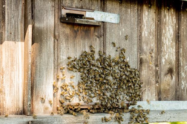 Vista ravvicinata delle api che lavorano portando polline di fiori all'alveare sulle zampe. il miele è un prodotto dell'apicoltura. il miele d'api viene raccolto in bellissimi favi gialli.