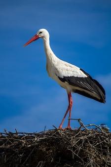 Vista ravvicinata di un uccello bella cicogna bianca sul nido.
