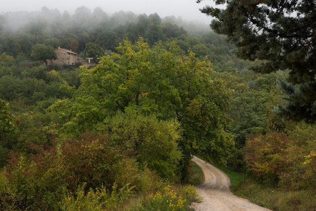 Vista scenica della strada non asfaltata che passa attraverso la foresta, greve in chianti, toscana, italia