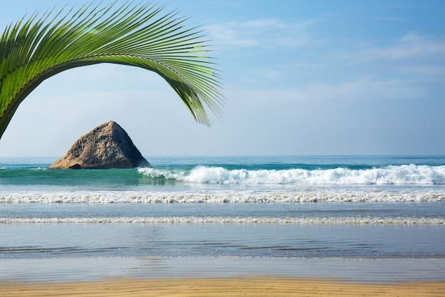 Vista sul mare con foglia di palma