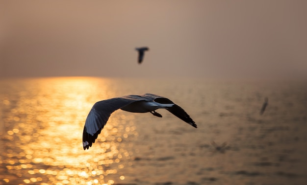Vista sul mare dell'uccello volante nel tempo di tramonto