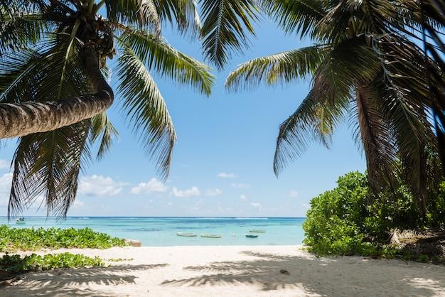 Vista sull'oceano con palme da cocco e barche