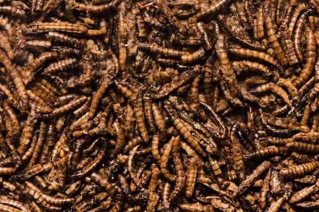 Vista superiore dei vermi fritti deliziosi