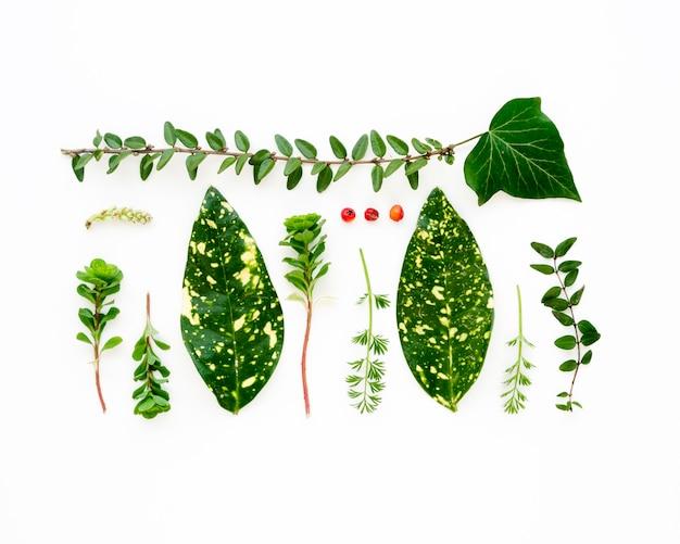 Vista superiore del concetto verde delle foglie con lo spazio della copia