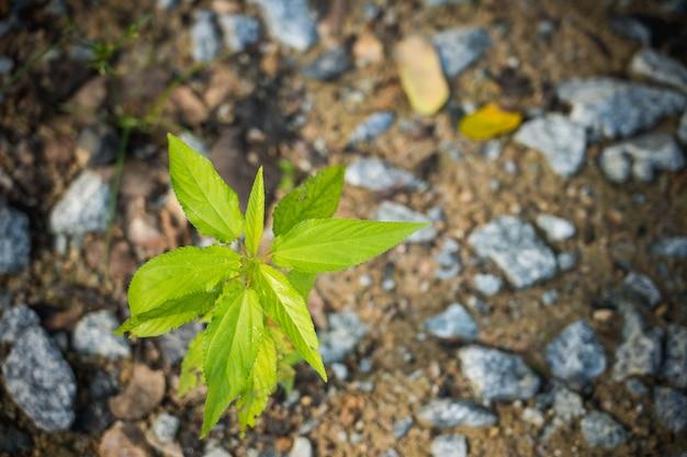 Vista superiore del germoglio verde che cresce fuori dalla priorità bassa a terra