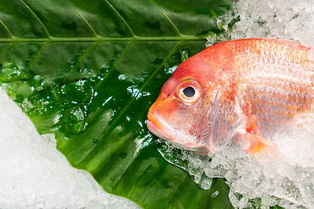 Vista superiore del pesce naturale sano crudo su ghiaccio, spazio della copia