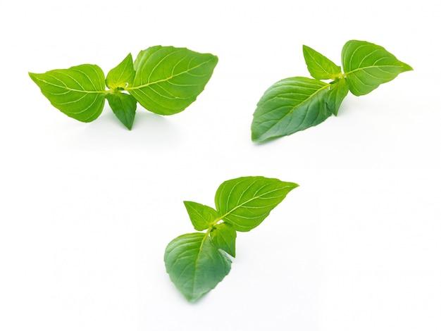 Vista superiore dell'alimento dell'ingrediente delle foglie del basilico su bianco