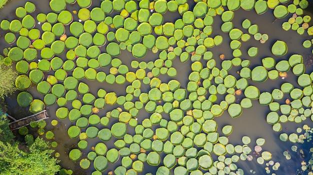 Vista superiore della foto aerea delle ninfee di victoria