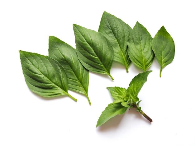 Vista superiore delle foglie fresche del basilico isolate sulla parete bianca.