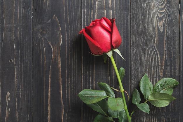 Vista superiore di un fiore della rosa rossa sul fondo di legno scuro della tavola.