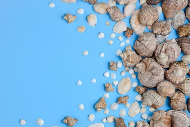 Vista superiore di vari tipi di conchiglie su sfondo blu.